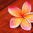 Stock Photo: Drop of water on Plumeria, tropical flower