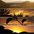 Stock Photo: Four sunsets
