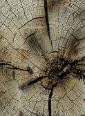 Couper l'extrémité du bois — Photo