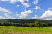 Landskap av den gröna skogen med — Stockfoto