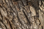Old cracked willow bark texture — Stock Photo