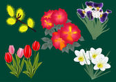 Set of spring flowers — Stock Vector