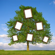 Family Tree - Stock Photo