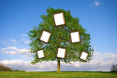 Family Tree — Stock Photo