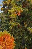 Feuillage coloré sur l'arbre tropical — Photo