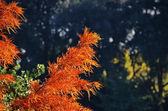 Colorful foliage on the tropical tree — Stock fotografie