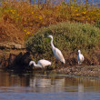 Foto Stock: Herons family near lake