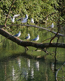 Gulls team perched on the trunk — Stock Photo