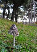 Mushroom near the country road — Stock Photo