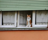 Cat show oneself at the window — Stock Photo