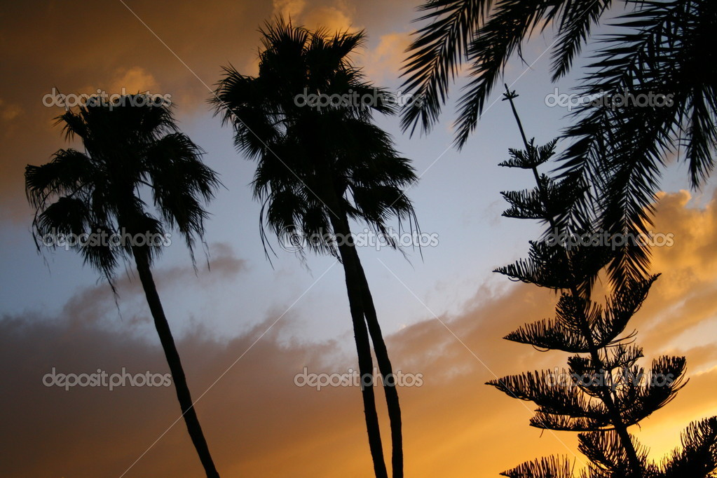 The clouds and trees — Stock Photo #9294168