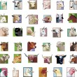 Set - animals from a farm — Imagen vectorial