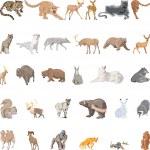 Wild Animals Set — Stock Vector