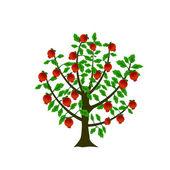 Pomegranate tree — Stock Vector