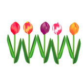Tulips — Stock Vector