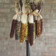 Multi Colored Indian Corn Hanging on a Pitchfork - Stock Photo