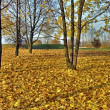Autumn idyllic wallpaper — Stock Photo #9227693