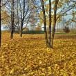 Stock Photo: Autumn idyllic wallpaper