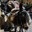 Saddled Donkeys — Stock Photo #9361626