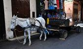 Saddled Donkey — Stock Photo
