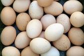 花园里的新鲜鸡蛋 — 图库照片