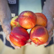 Stock Photo: Fresh nectarine fruits