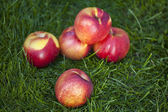 Fresh nectarine fruits — Stockfoto