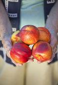 新鲜油桃水果 — 图库照片
