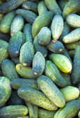 Pepinos en mercado — Foto de Stock