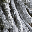 Winter trees detail — Stock Photo
