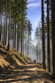 Güzel dağ ormanları — Stok fotoğraf