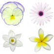 Spring Flower Decals — Stock Photo