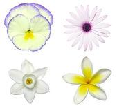 Spring Flower Decals — Stock Photo
