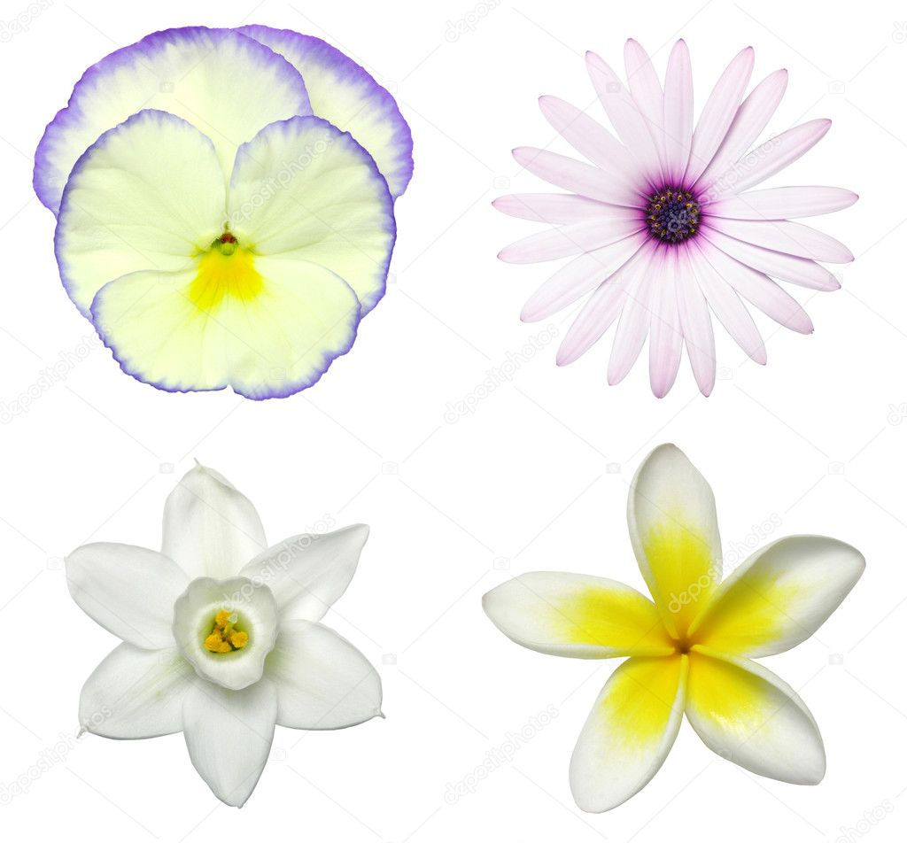 Spring flower decals from top left: pansy, daisy, jonquil, frangipani — Stock Photo #10087820