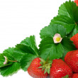 Strawberry Border - Stock Photo
