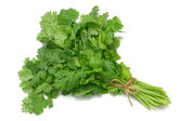 Herb Series Cilantro — Stock Photo