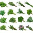 Herb Series Sampler — Stock Photo