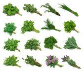 Herb Series Sampler — 图库照片