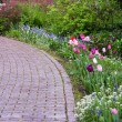 Garden path with tulips blooming — Stock Photo #10321745