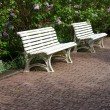 Three white garden benches on a paved pathway — Stock Photo #10321811