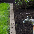 Stock Photo: Water faucet or spigot in garden