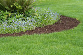 Flower bed with blue flowers — Stock Photo
