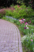 Garden path with tulips blooming — Stock Photo