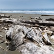 Driftwood piled on beach — Stock Photo