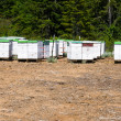 Bee hives — Stock Photo #9344131