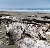 Driftwood piled on beach — Stock Photo