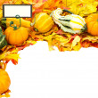 Fall or Thanksgiving or Halloween decoration isolated on white — Stock Photo #9393515