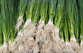 Green onions at the farmer's market — Stock Photo