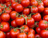 Vine ripened tomato clusters — Stock Photo