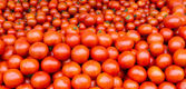 Fresh tomatoes on display — Stock Photo